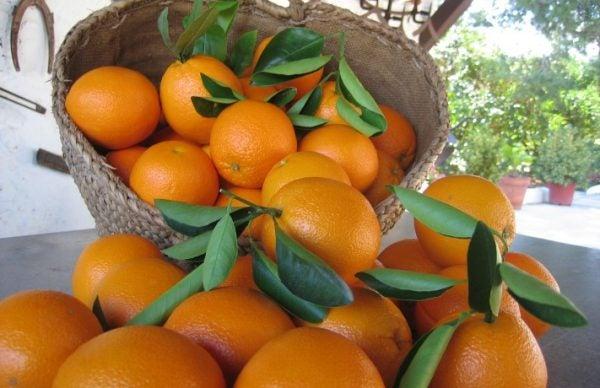 naranjas-valencia