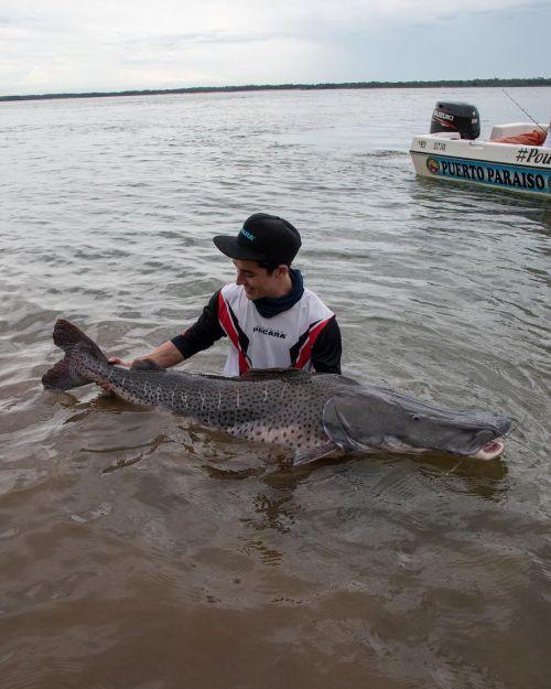 Joven sujetando pez surubi
