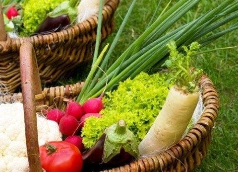Alimentacionecolgica.jpg