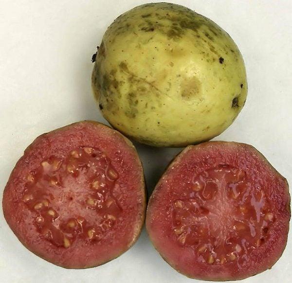 Cascos-de-guayaba-cubanos-fruta-guayaba