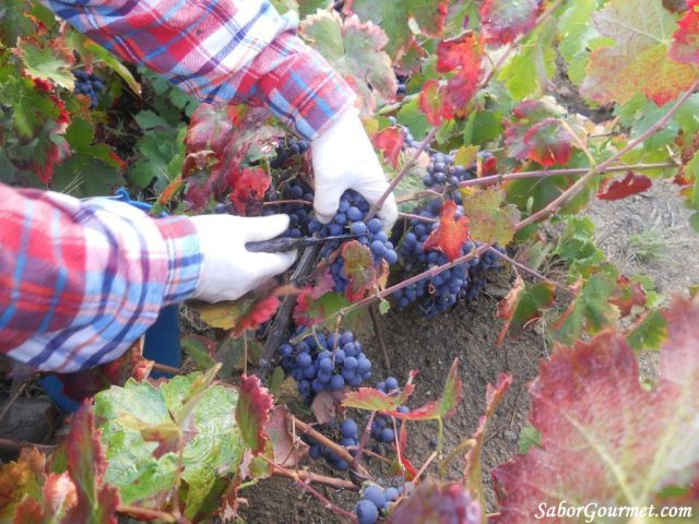 cortar uvas