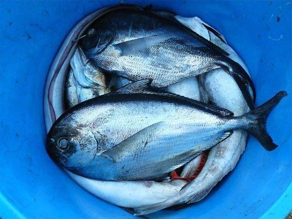 lubina-al-horno-pescado