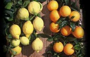 Confitura inglesa de naranja