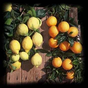 Mermelada inglesa de naranjas