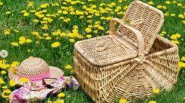 ¿Qué llevarte a un picnic?